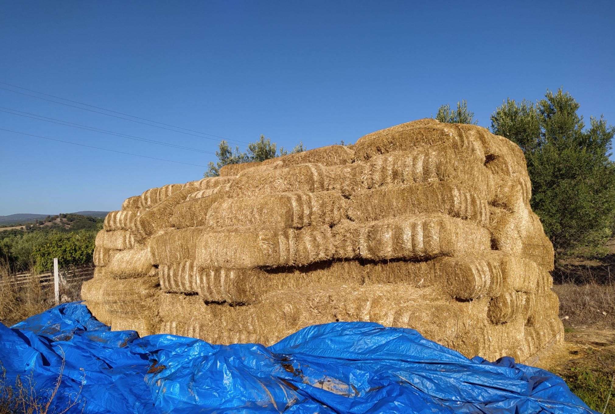 Emre Tan Satılık Buğday samanı - 12.11.2020