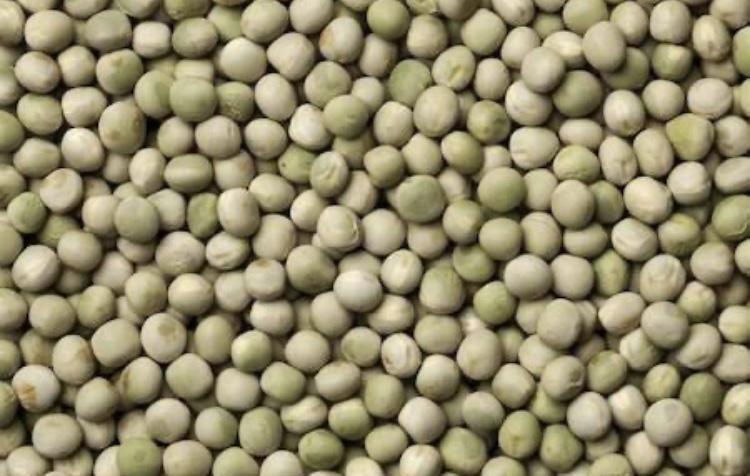 Bezelye tohumu - Üretici Ali Şen 10 tl fiyat ile 20.000 kilogram bezelye tohumu  satmak istiyor