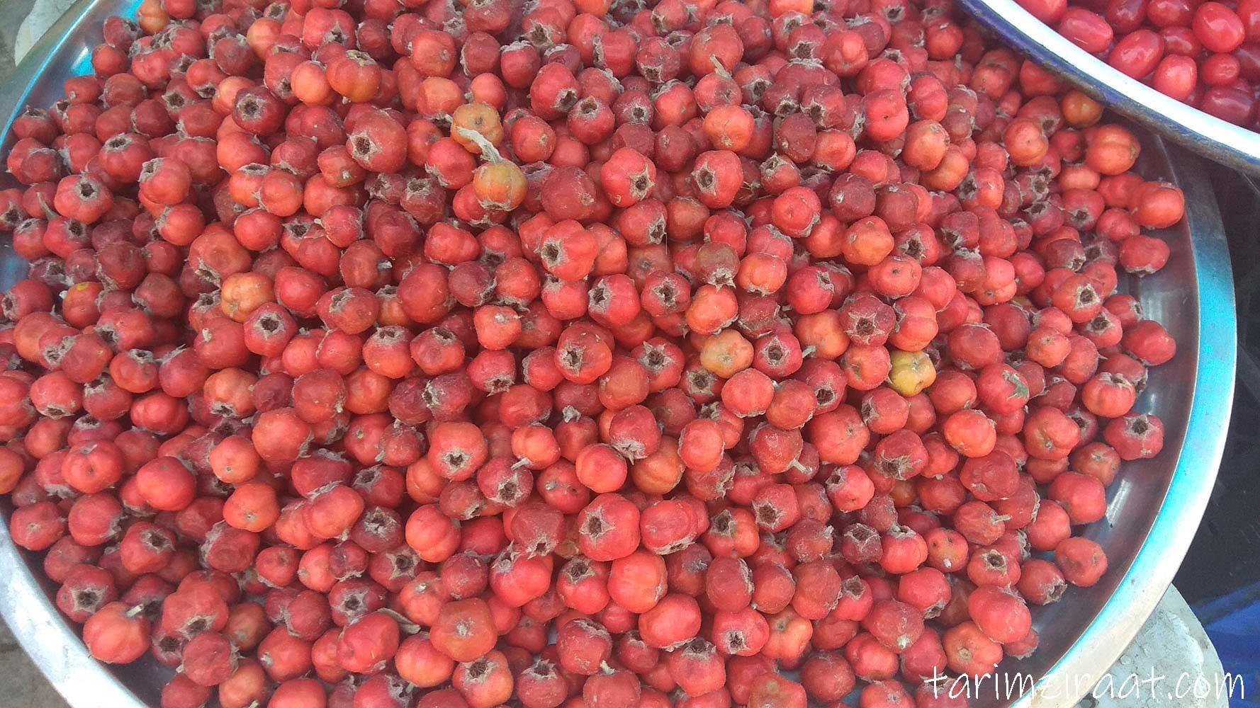 Alıç meyvesi fiyatları,Alıç meyvesi piyasası, Alıç meyvesi resmi