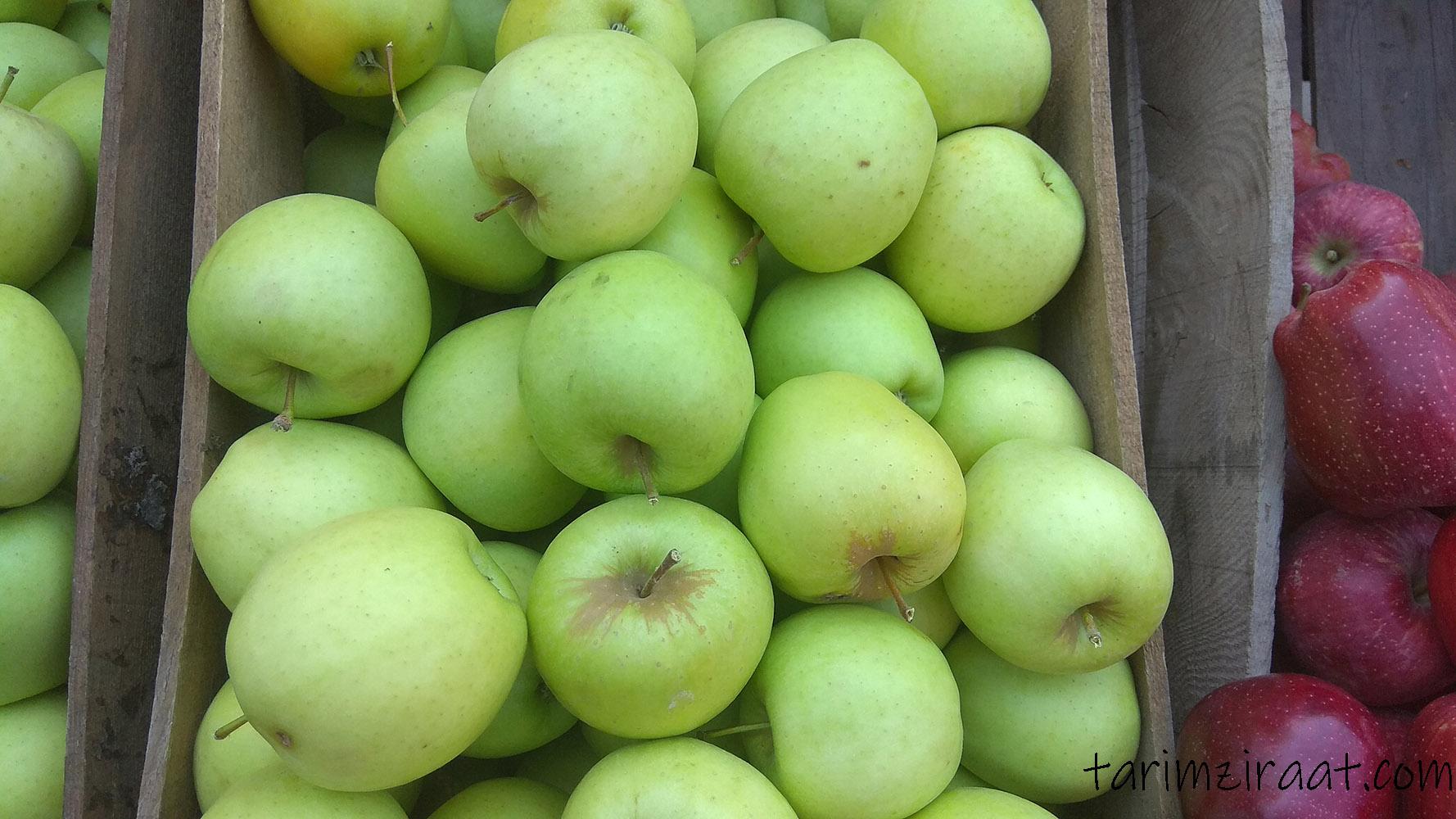 Elma fiyatları,Elma piyasası, Elma resmi
