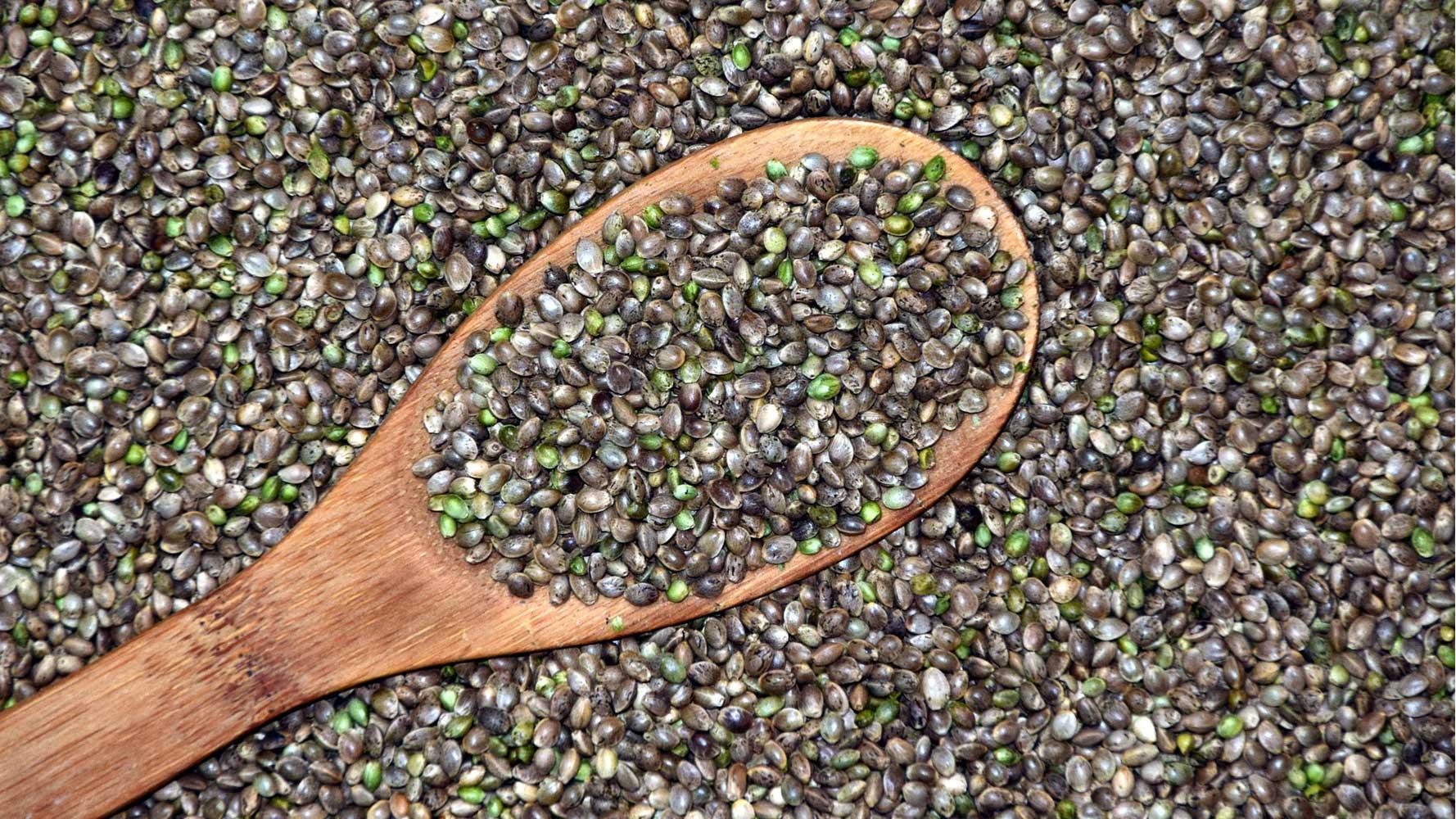 Kenevir tohumu fiyatları,Kenevir tohumu piyasası, Kenevir tohumu resmi