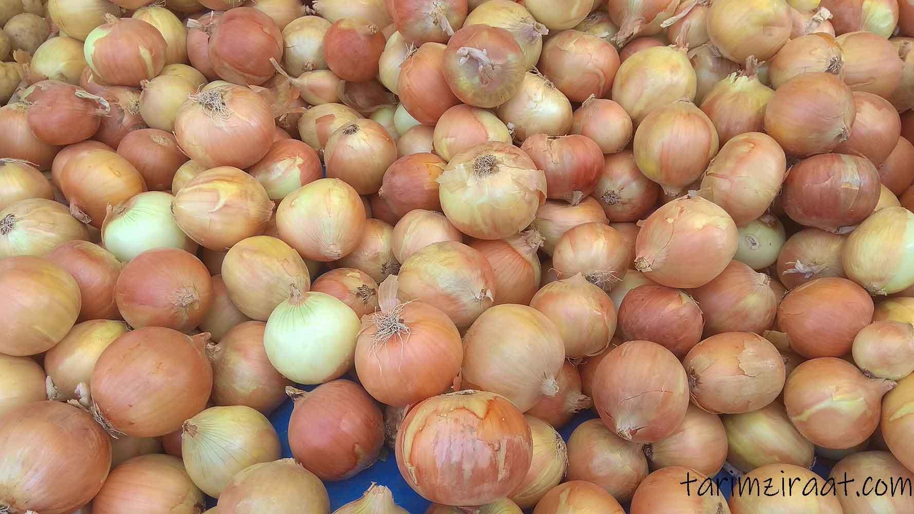 Kuru soğan fiyatları,Kuru soğan piyasası, Kuru soğan resmi