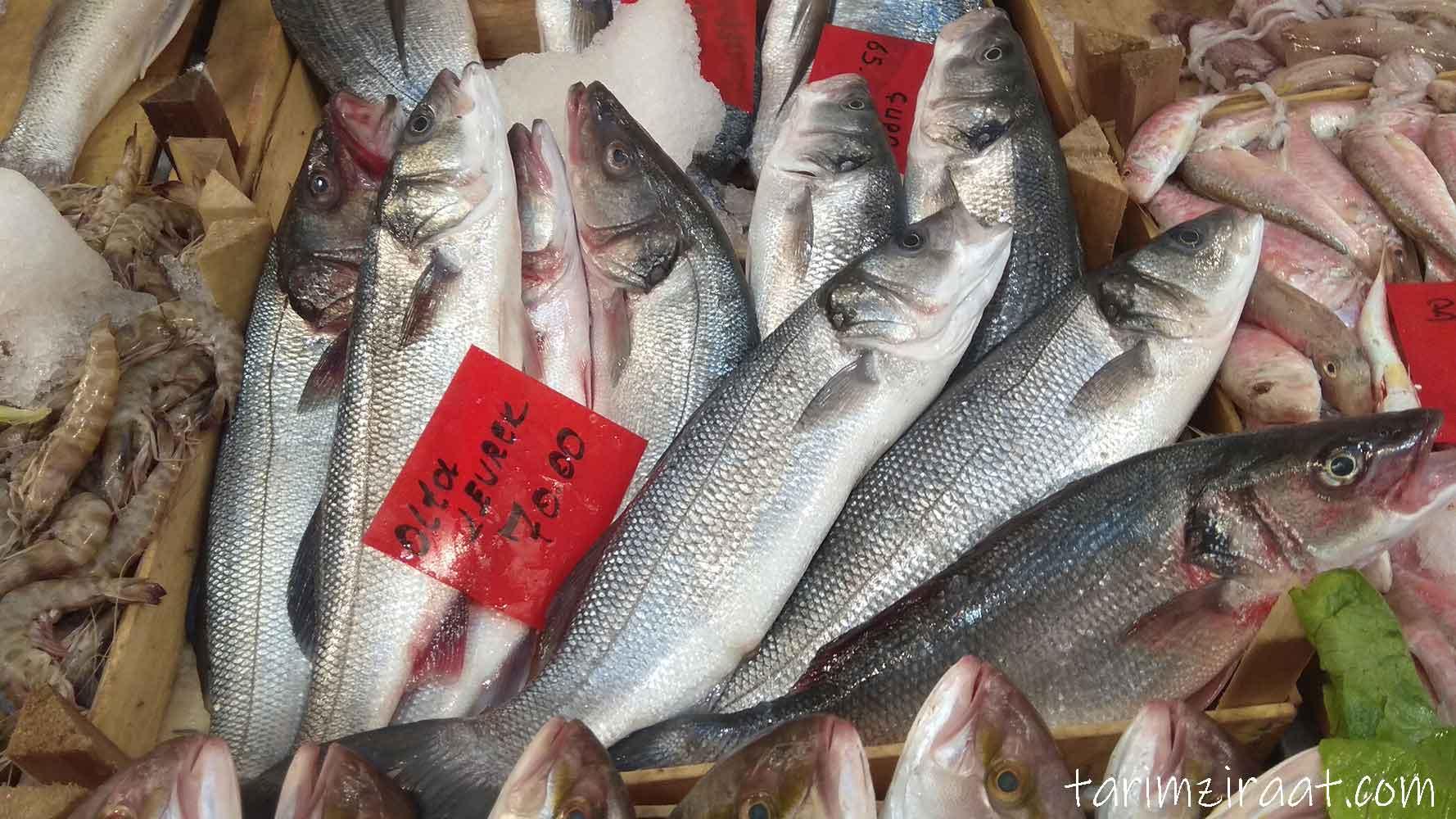 Levrek fiyatları,Levrek piyasası, Levrek resmi