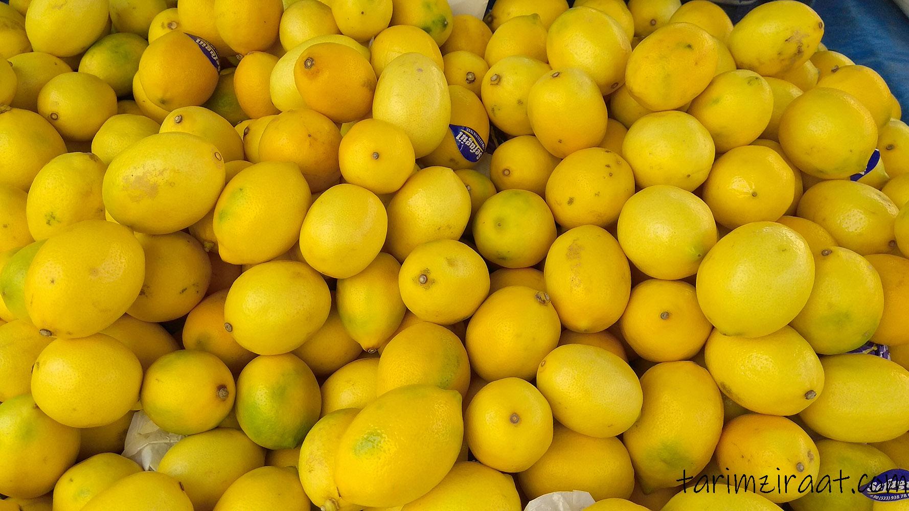 Limon fiyatları,Limon piyasası, Limon resmi