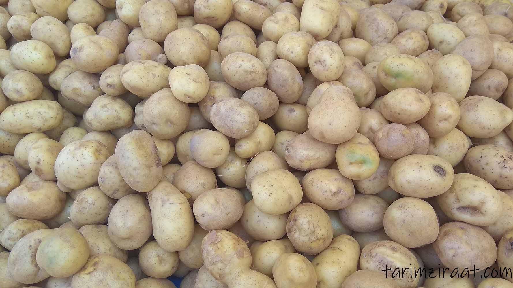 Patates fiyatları,Patates piyasası, Patates resmi