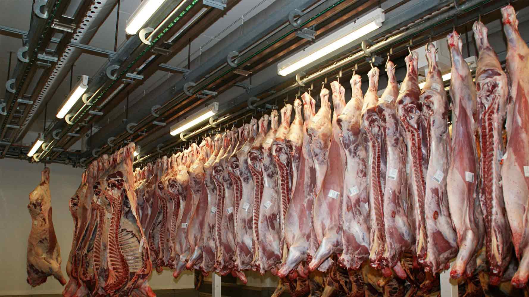 Sığır kesim fiyatları,Sığır kesim piyasası, Sığır kesim resmi