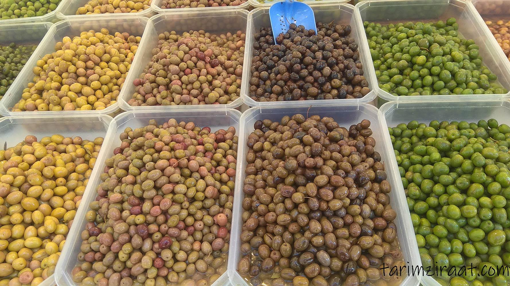 Zeytin fiyatları,Zeytin piyasası, Zeytin resmi