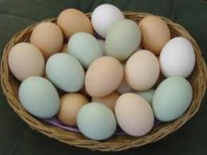 Yumurta kabuklarının faydaları